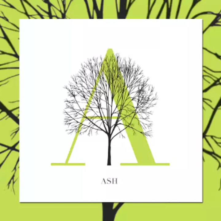 Trees as typography